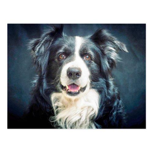 Border Collie Dog Portrait Postcard