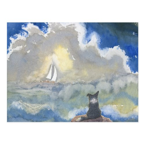Border Collie Dog Staring Out to Sea Postcard