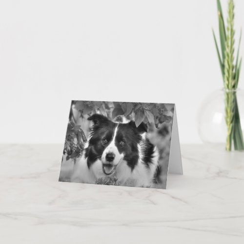 Border Collie in the Woods Birthday Card
