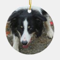 Border Collie Stare Dog Ornament
