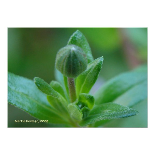 Budding into Spring Posters