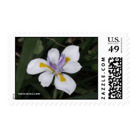 Butterfly Iris - Postage