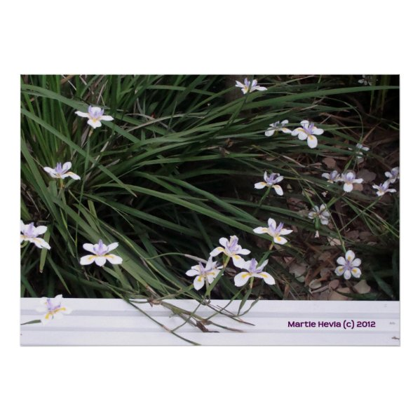 Butterfly Irises Poster