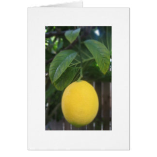 California Lemon Greeting Cards