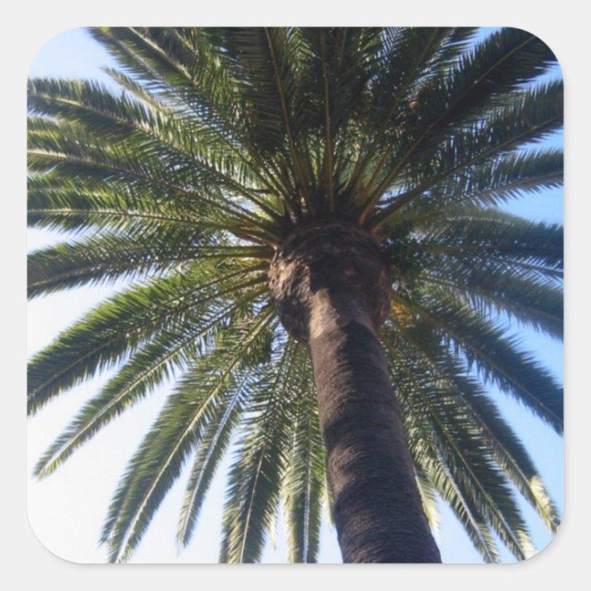 California Palm Tree Beach Custom Decal Stickers