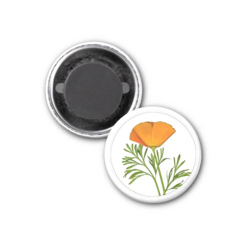 California Poppy in a Circle - Magnet
