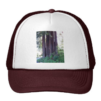 California Red....woods Mesh Hats