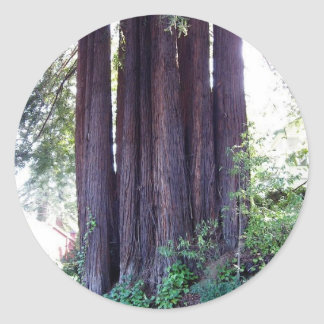 California Red....woods Round Sticker