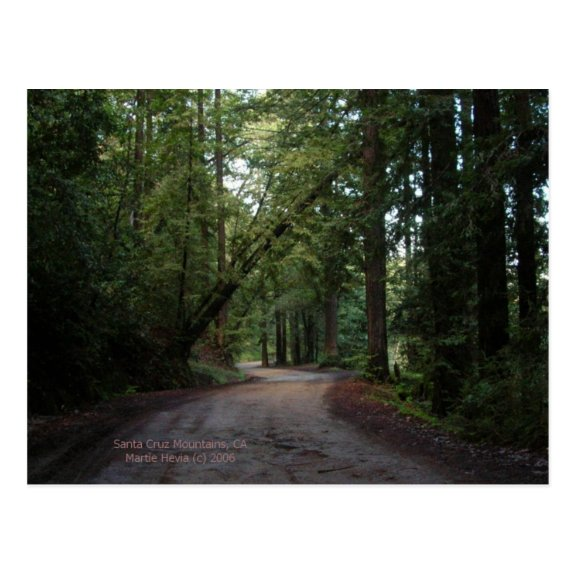 California Seasons - Redwoods Road - Postcard