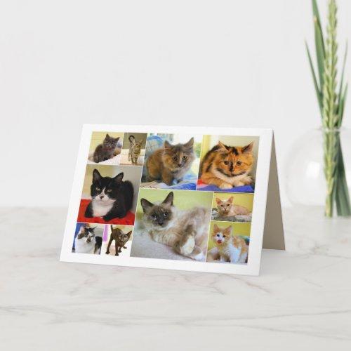 Cat Collage Birthday Card card