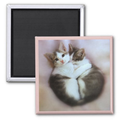 Cat Lovers Magnet magnet