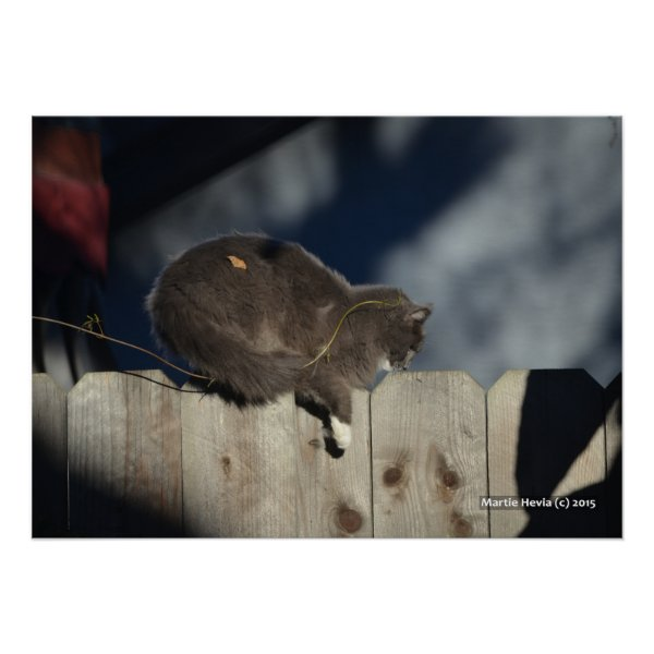 Cat on Fence (13) Poster