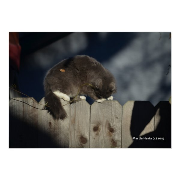 Cat on Fence (17) Poster
