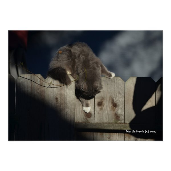 Cat on Fence (18) Poster