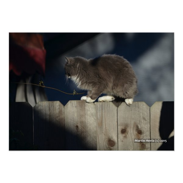 Cat on Fence (19) Poster