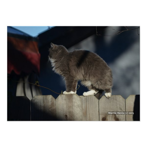 Cat on Fence (20) Poster