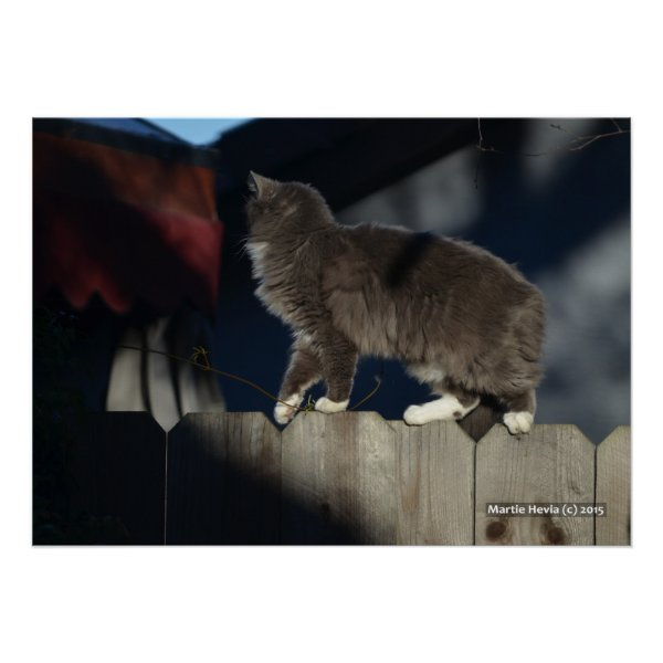 Cat on Fence (21) Poster
