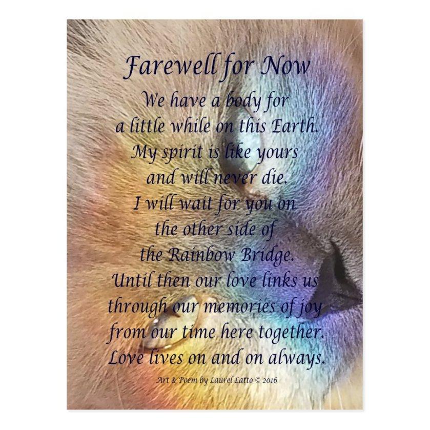 Cat Rainbow Bridge Pet Grief Sympathy Postcards