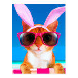 Cat with sunglasses and rabbit ears postcard