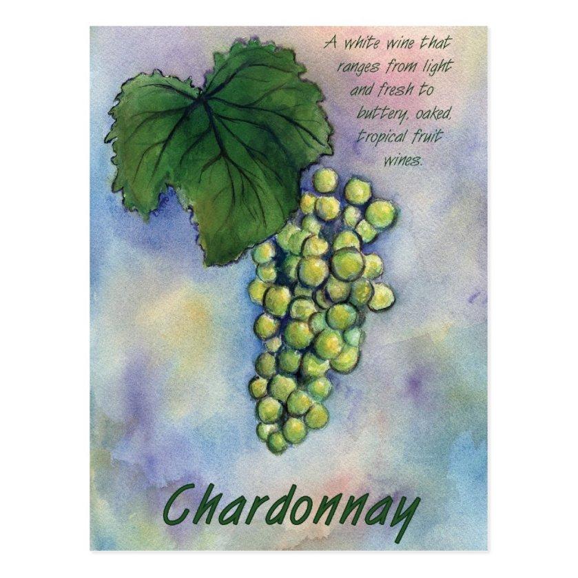 Chardonnay Wine Grapes & Description Postcard