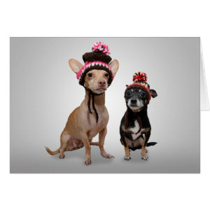 Chihuahua Dogs With Hats Photo Greeting Card