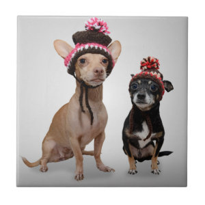 Chihuahua Dogs With Hats Photo Small Square Tile