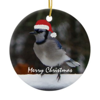 Christmas Blue Jay Ornament