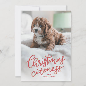 Christmas cuteness cute pet holiday card