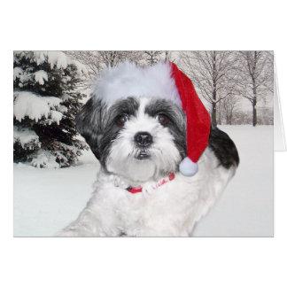 Shih Tzu Christmas Cards Zazzle