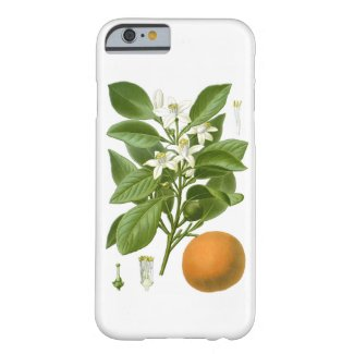 Citrus Fruit Orange Botanical no. 2 Home Decor