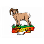 Colorado Bighorn Postcard