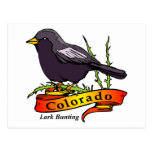 Colorado Lark Bunting Postcard