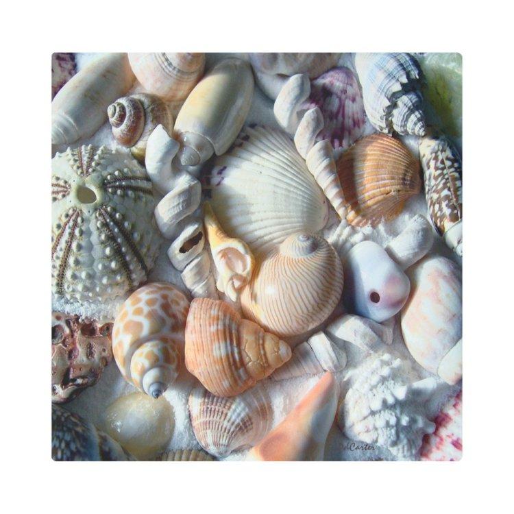 Colorful Tropical Seashell Collection Photography Metal Print