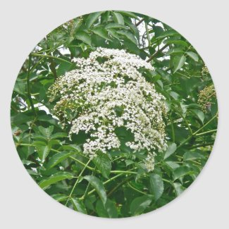 Common Elderberry Coordinating Items Classic Round Sticker