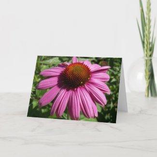 Cone Flower Card card