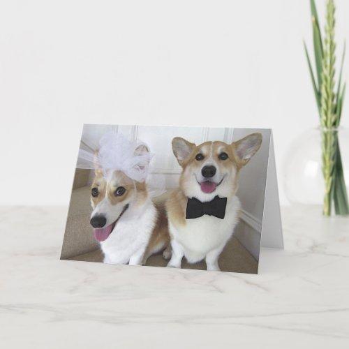 corgis dressed up as bride and groom card