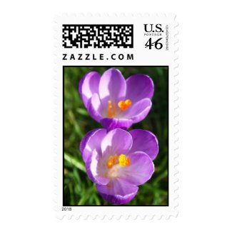 Crocus couple zazzle_stamp
