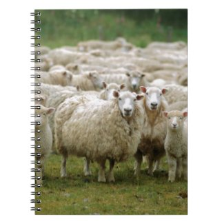Curious Sheep Spiral Notebook