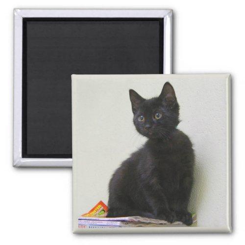 Cute Black Kitten Magnet