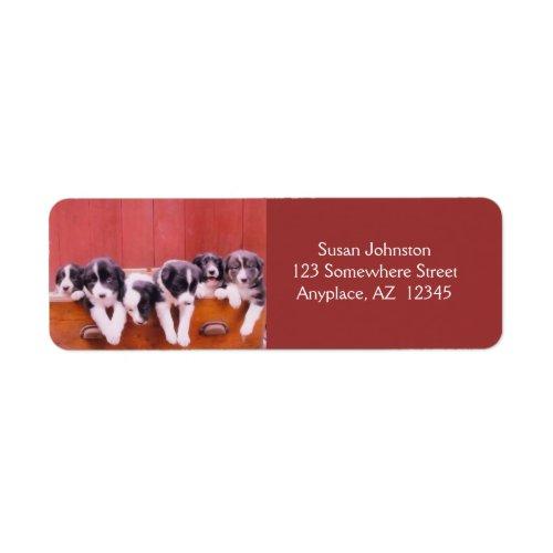 Cute Border Collie Puppies Label