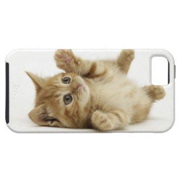 Cute Kitten iPhone SE/5/5s Case