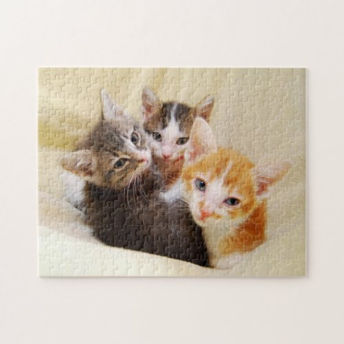 Cute Kitten Trio Jigsaw Puzzles