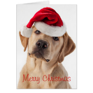 Dog Christmas Cards Invitations Greeting Amp Photo Cards