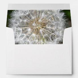 Dandelion Envelope
