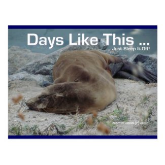 Days Like This (Sea Lion) - Postcard