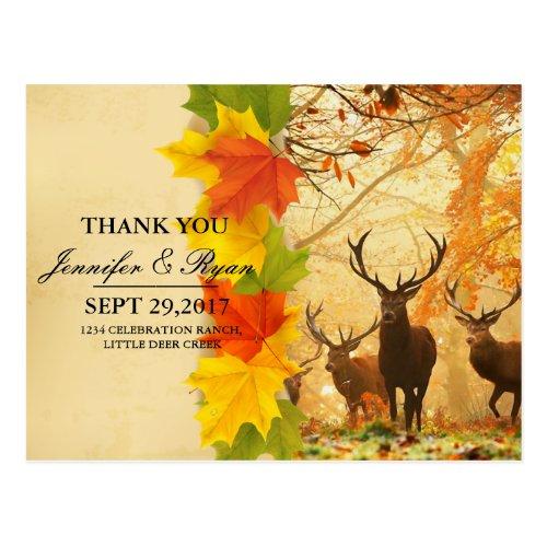 Deer in the autumn sun rays invitations