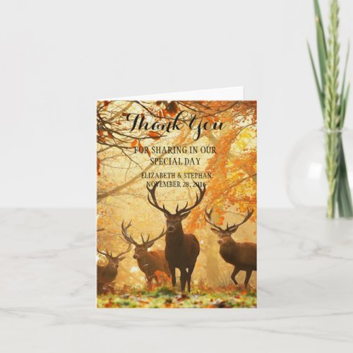 Deer in the autumn sun rays/Thank You Thank You Card