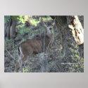 Deer in Woods Poster