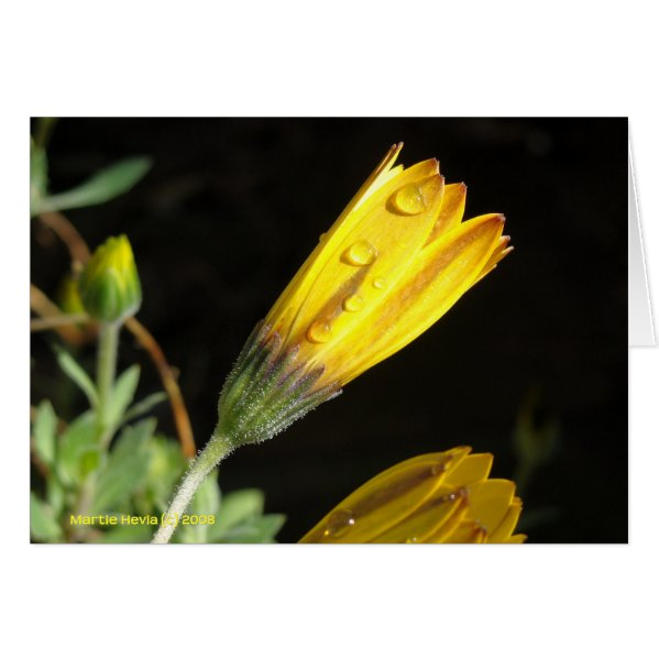 Dew on a Yellow Daisy - Note Card