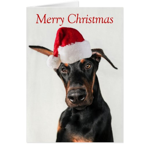 Doberman Dog With Santa Hat Christmas Card Zazzle